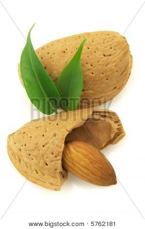 Almond With Leaves