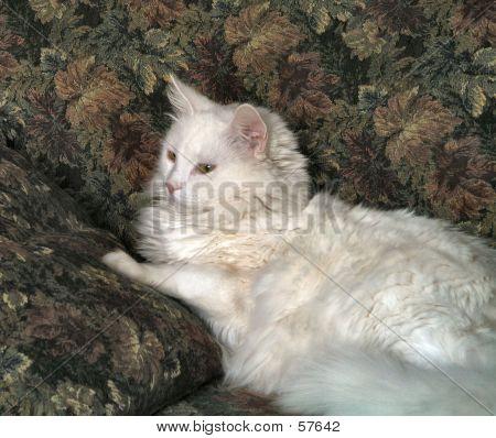 Soft Furry White Cat