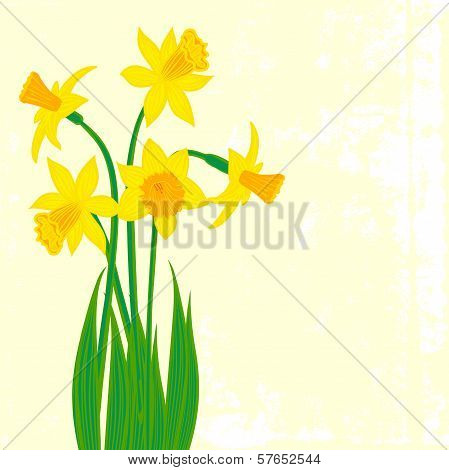 Card with five narcissus