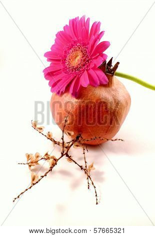 pink gerbera with pomegranate