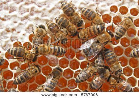 Bees Behind Work