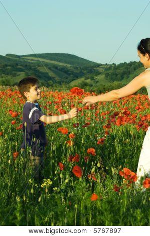 Boy Offering Poppy Flowers