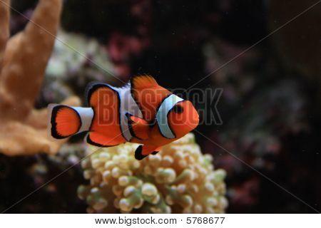 Fondo de acuario