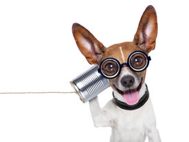 pic of ugly  - silly ugly dog on the phone with a can - JPG