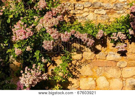 Horizontal Pic Of Climbing Plant In Stoned Wall