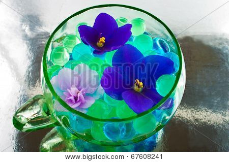 African Violet Flowers In The Hydrogel