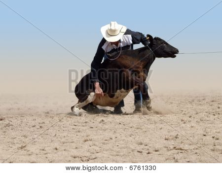 Cowboy About To Tie A Calf With A Piggin' String