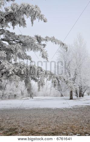 Frosty Foggy Scene