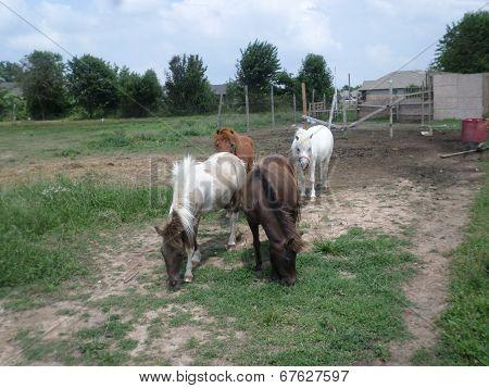 4 ponies