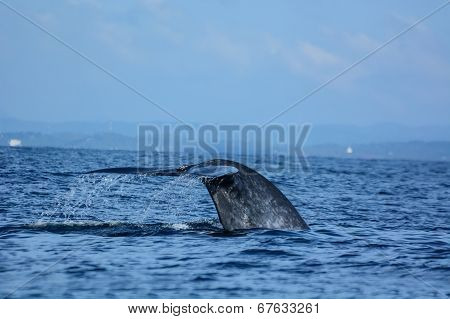 tale of the whale in blue sea