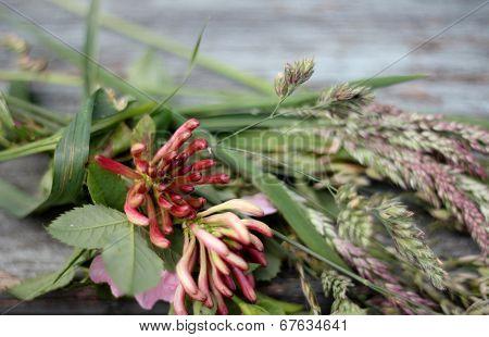 Cut wild flowers