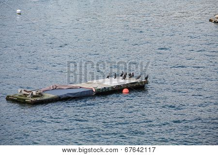 Mooring Platform In Harbor With Seabirds