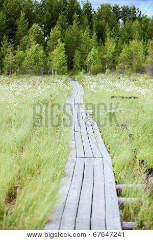 Wooden Pathway Between Swamp To Evergreen Forest