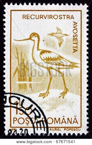 Postage Stamp Romania 1991 Pied Avocet, Wader Bird