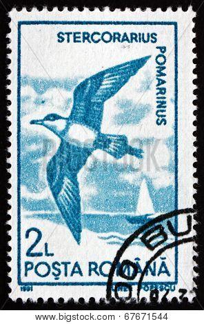 Postage Stamp Romania 1991 Pomarine Skua, Bird