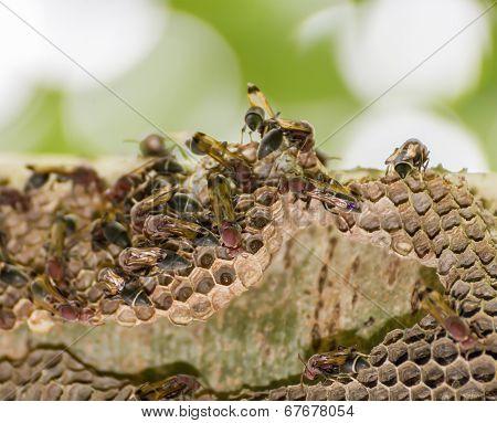 Hornet On Net