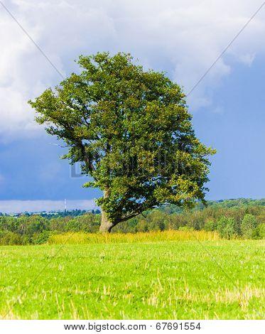 Lonely Tree Field Landscape