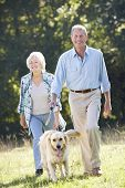 foto of stroll  - Senior couple walking dog - JPG