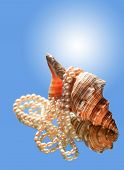 picture of conch  - Beautiful conch shell with pearls necklace on blue background with reflection - JPG