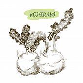picture of kohlrabi  - Kohlraby - JPG