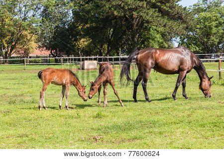 Horse Foal Colt Stud Farm