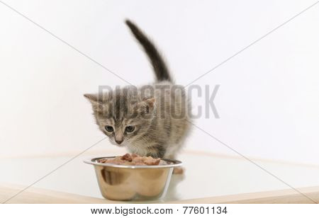 Adorable Furry Kitten Observing Cat Food In The Bowl On White Background