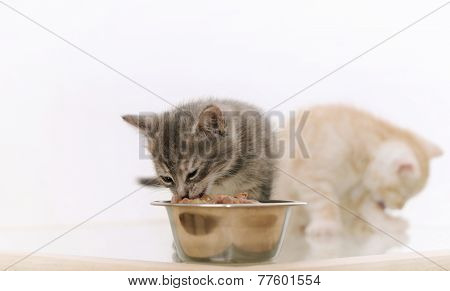 One Of Two Adorable Furry Kitten Eating Cat Food From The Bowl