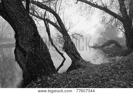 Autum River B&w Landscape With  Tree And Morming Mist