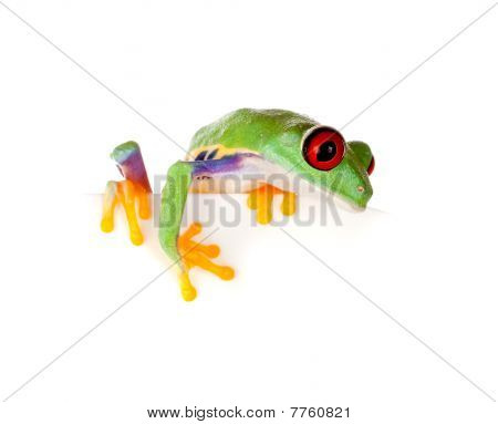 Red Eyed Frog On Paper
