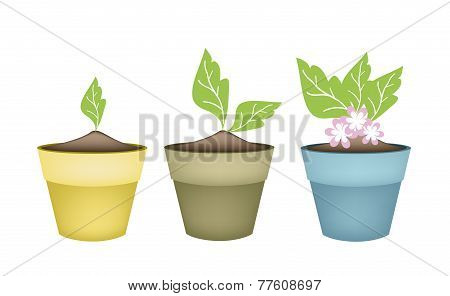 Beautiful Pink Flower in Terracotta Flower Pots