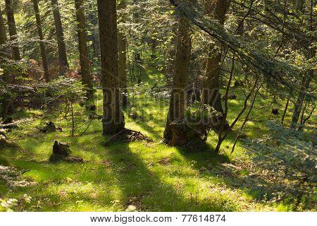 Deep Inside Larch Forest