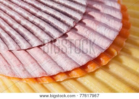 Background Of Some Colorful Sea Shells Macro
