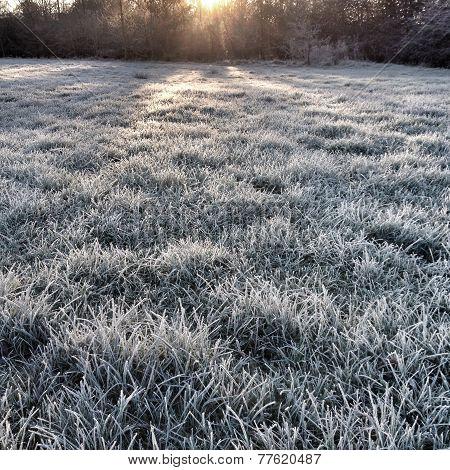 Frosty Morning in Winter