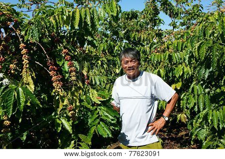 Asian Farmer, Coffee Bean Plantation, Vietnam Agriculture