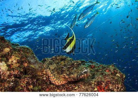 Scorpionfish and Moorish Idol on coral reef