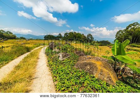 Country Road Crossing Rice Paddies
