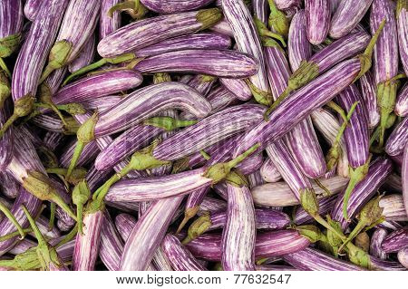 Fresh Vegetable Eggplant