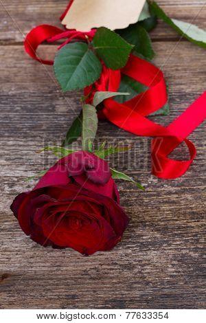 one scarlet red rose