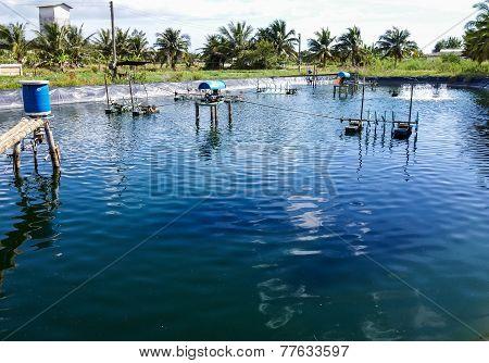 Shrimp Ponds