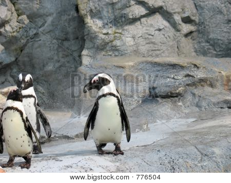 3 cute penguins