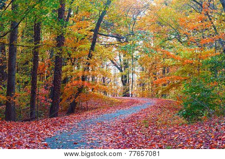 Trees in colorful foliage along a park pathway.