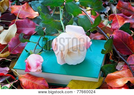 Beautiful White Rose And The Book Among The Yellow Autumn Leaves