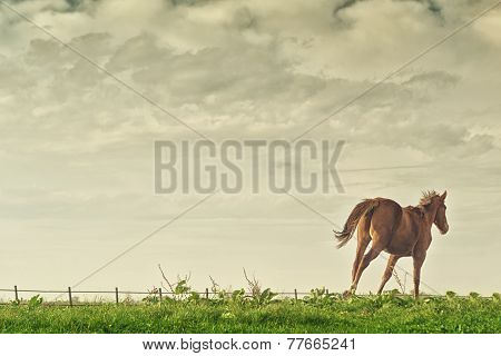 Beautiful Chestnut Brown Horse Running