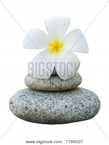 Isolated Frangipani With With Stack Of Rocks