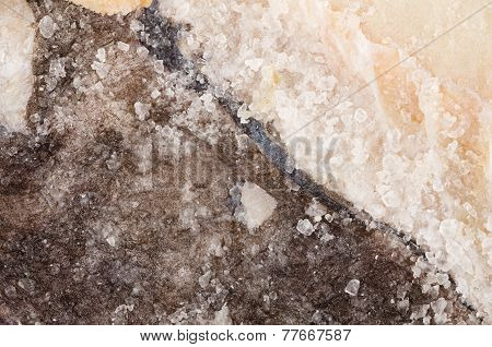 Salt Preserved Cod