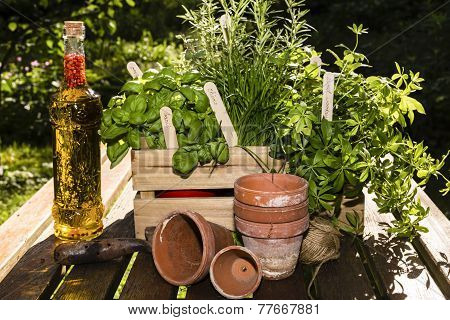 Herbs And Herbs In Oil