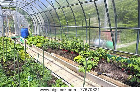 Growing Vegetables In Greenhouses