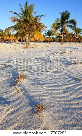 White sand and palm trees. Playa Sirena. Cayo Largo. Cuba.