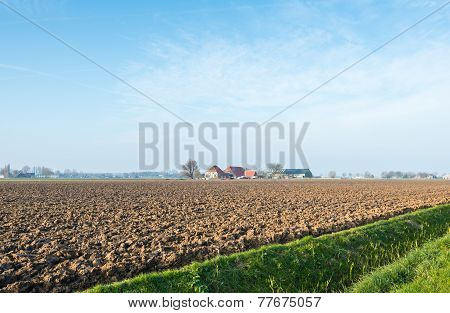 Dutch Polder Landscape In Afternoon Sunlight
