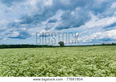 Scenic View Grass Lawn